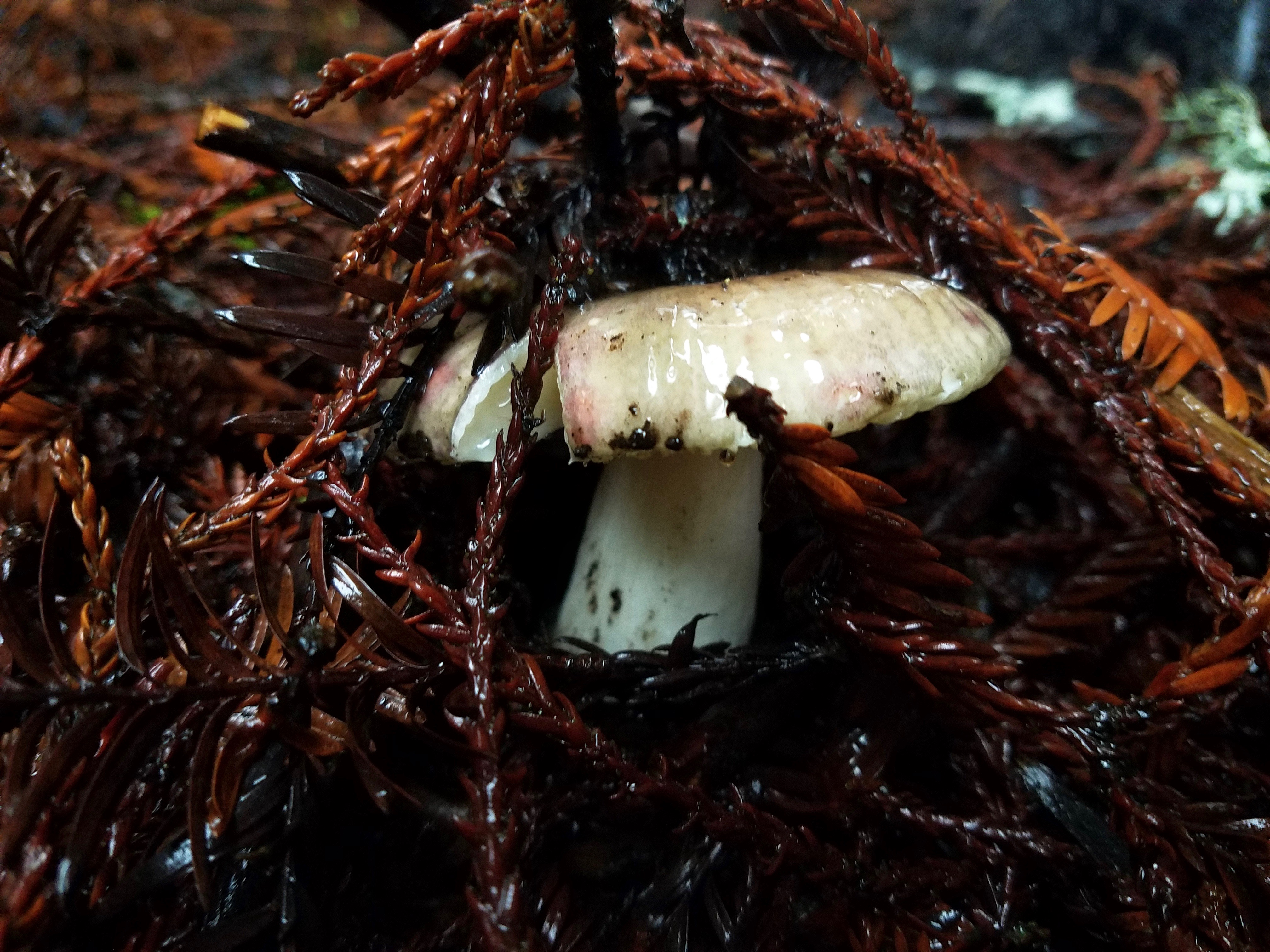 Fabulous Fungi - 6