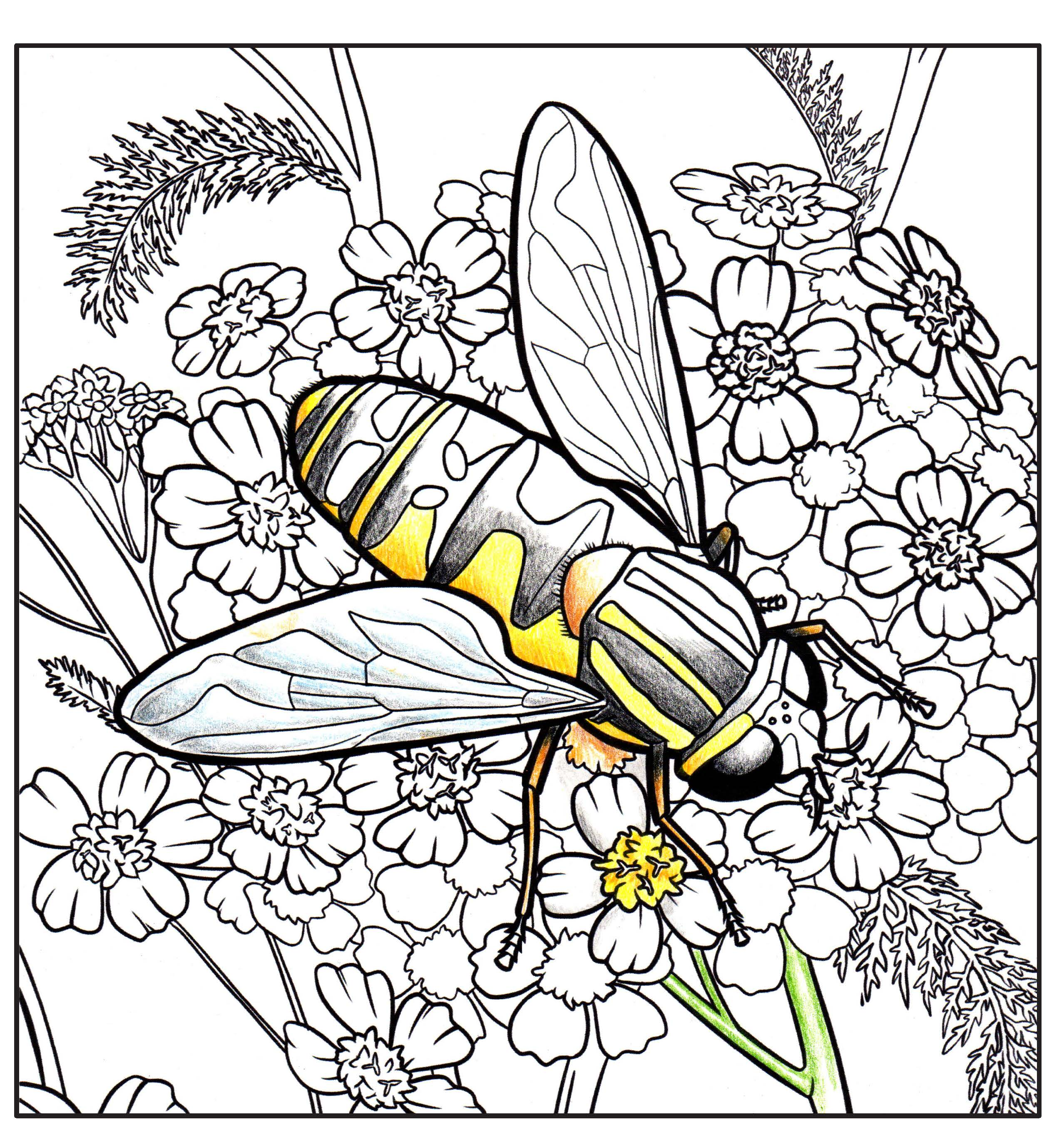Pages from Pollinators-of-Alaska-coloring-book